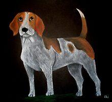 Tri-colour Beagle by Katie Weychardt