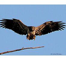 Spread Eagle Photographic Print