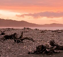 Driftwood on Gillespies Beach, New Zealand by Elana Bailey