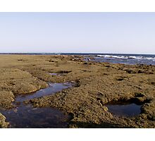 Grassy Sea weed.. =] Photographic Print