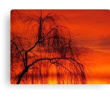 Willow over orange sky Canvas Print