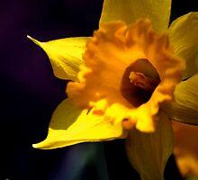 flower 15 by Kittin