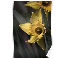 flower 20 Poster