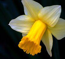flower 22 by Kittin