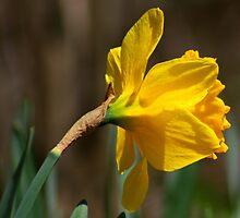 flower 27 by Kittin