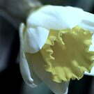 flower 37 by Kittin
