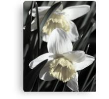 flower 42 Canvas Print