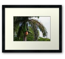 Humour from Cuba Framed Print