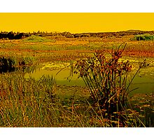 Reeds In A Pond Photographic Print