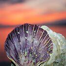 Shell by sarah ward