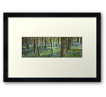 Bluebell Profusion Framed Print