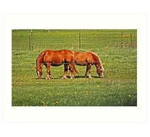Pair Of Mares Art Print