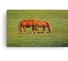 Pair Of Mares Canvas Print