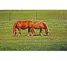 Pair Of Mares Photographic Print