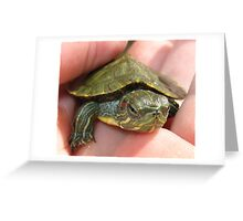 Baby Turtle Greeting Card