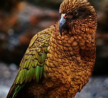 Kea 2 by Wanagi Zable-Andrews
