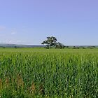 Wheat Field by DPalmer