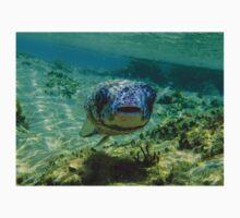 Inquisitive Puffer Fish (Tetraodontidae) T-Shirt