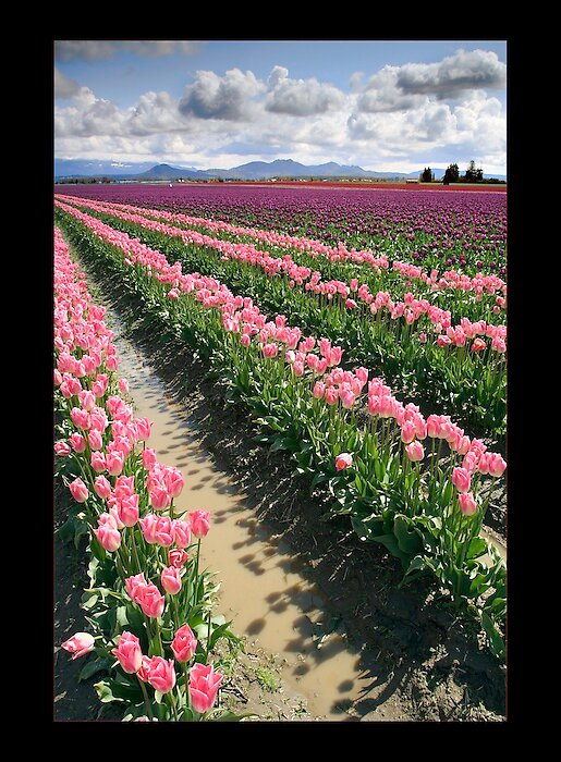 Skagit Valley Washington II 2008. by psychedelicmind