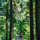 Tegernsee Trail  by kevin smith  skystudiohawaii