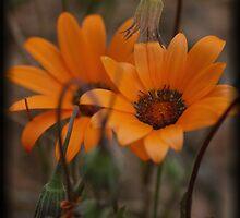 Orange Wild Flowers by Chris Popa