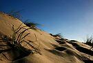 Golden Beach Dune 1 by Richard Heath