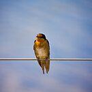 Birdie chillin by demistified