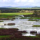Eubenangee Swamp by Janine  Hewlett