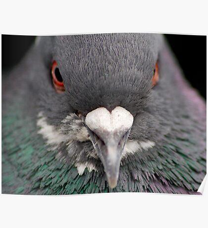 Pigeon Portrait Numero Dos Poster