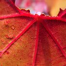 Autumn by Maryanne Lawrence