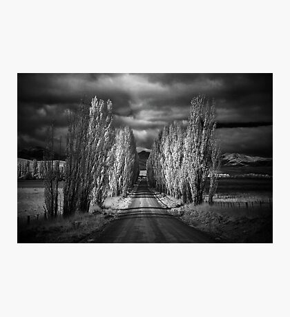 Autumn in Black and White Photographic Print