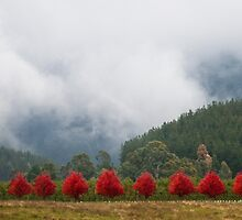 a row of red by Lisa  Kenny