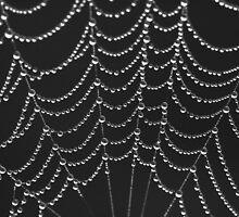 Dew Drops by Leeo