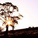 Backlit Eucalypt by Mishka Góra