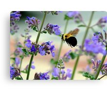 BEES RUSH IN Canvas Print