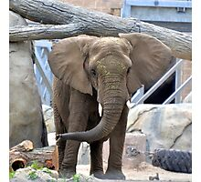 Elephant Ears  Photographic Print