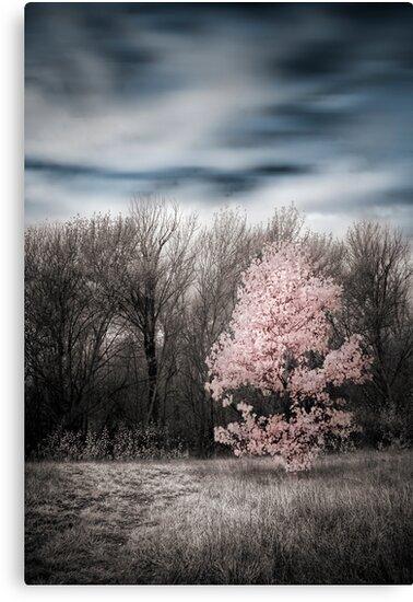 In Autumn  by Annette Blattman