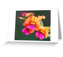 Flame Pea Greeting Card