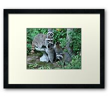 Raccoon Mom with 4 Kits Framed Print