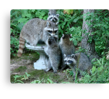 Raccoon Mom with 4 Kits Canvas Print