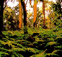Forest Ferns by reflector