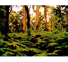 Forest Ferns Photographic Print