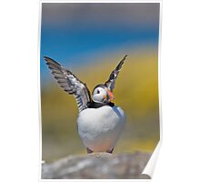 Puffin(g) Poster