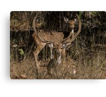 Spotted Deer In The Grass Canvas Print