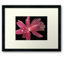 Super Pink Framed Print