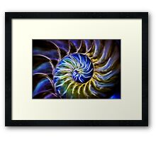 Nautilus Shell Abstract Framed Print