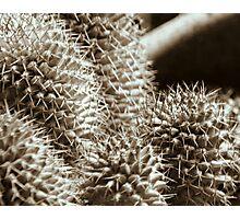 cactus 03 Photographic Print