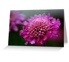 Violet Pedal Beauty Greeting Card