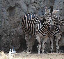 Kingdom1       (Zebras in camouflage*) by Liz Nolan