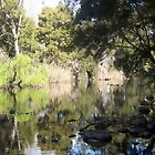 Goodradigbee River at Swinging Bridge Reserve by Kate Howarth
